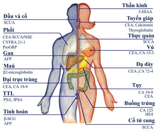 Các chất chỉ điểm sinh học ung thư - Tumor Marker