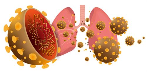 Siêu vi Corona mới 2019-nCoV: Từ cảm cúm đến suy hô hấp cấp