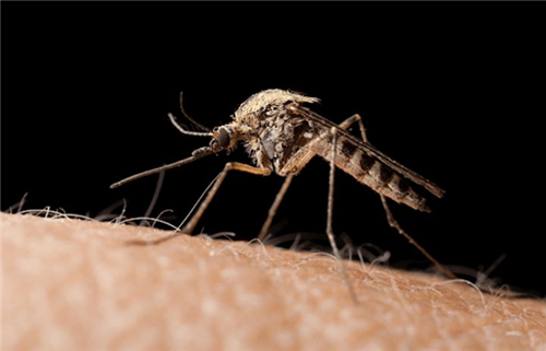Ngày Thế giới phòng, chống bệnh sốt rét 25/4: Chung tay đẩy lùi bệnh sốt rét