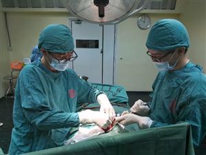 Phẫu thuật lấy nhiều cục bã thức ăn điều trị cho cụ bà 91 tuổi